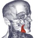 Мышца, опускающая уголок рта