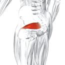 Грушевидная мышца
