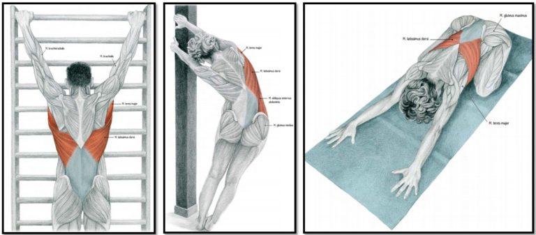 Растяжка спины после силовой тренировки