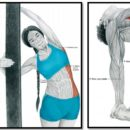 Растяжка мышц пресса после силовой тренировки