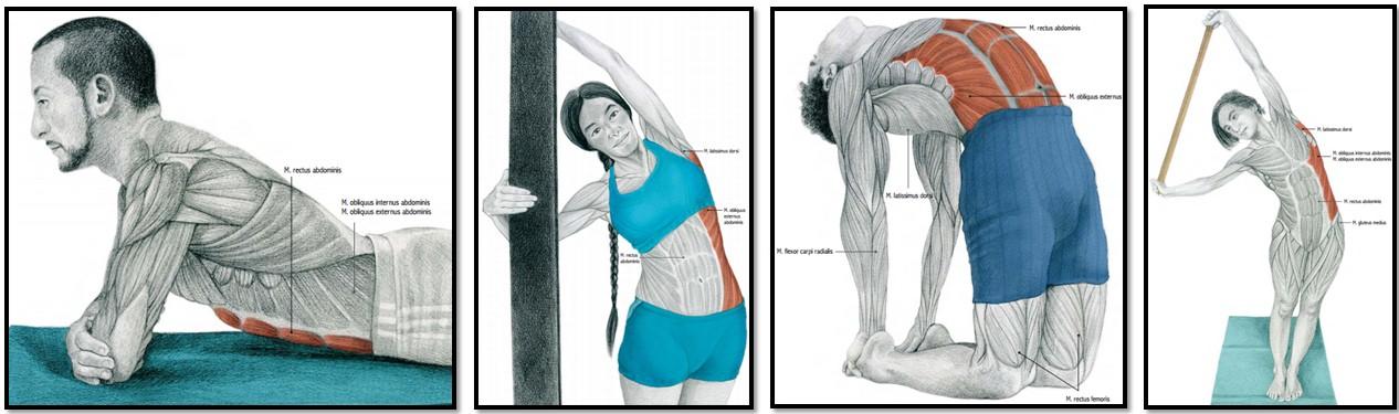 Как правильно делать растяжку тела